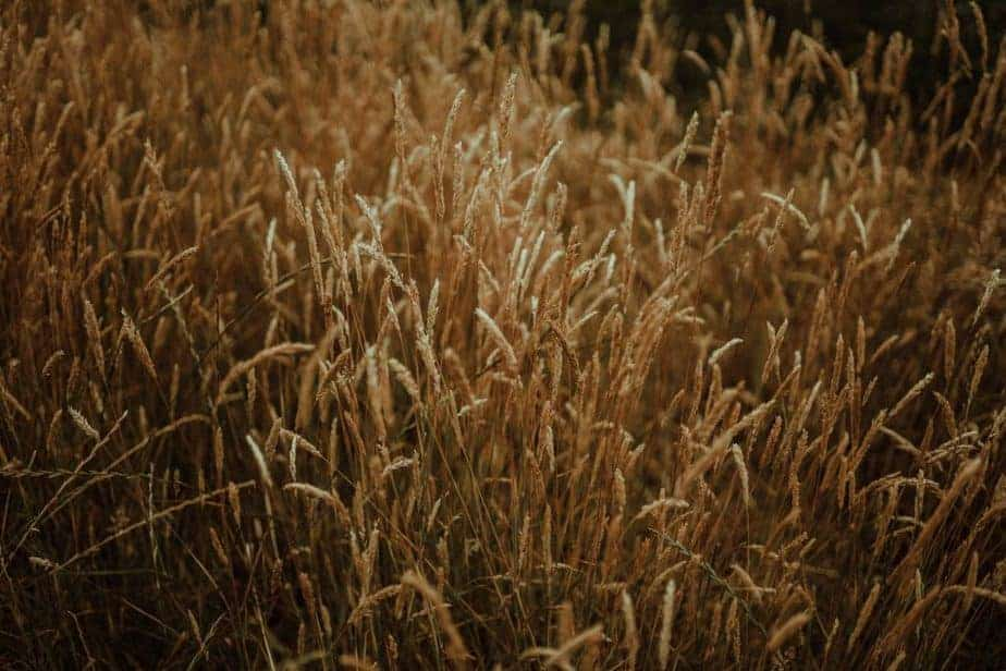 An image of hay at an intimate wedding at Northside Farm by Belle Art Photography